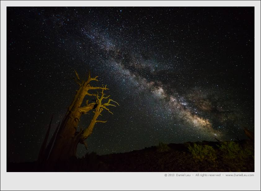 Bristlecone pine under milky way