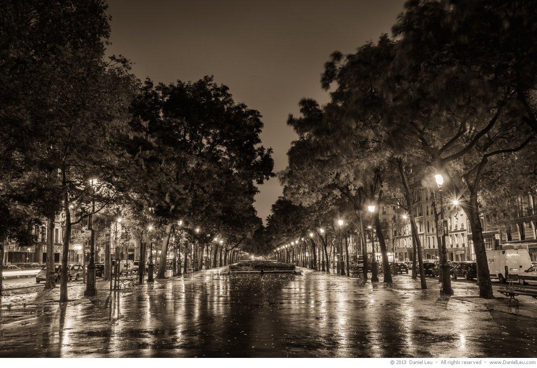 Tree lined park at night