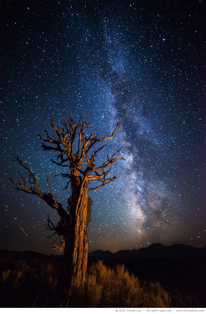 Dead Tree with Milkyway