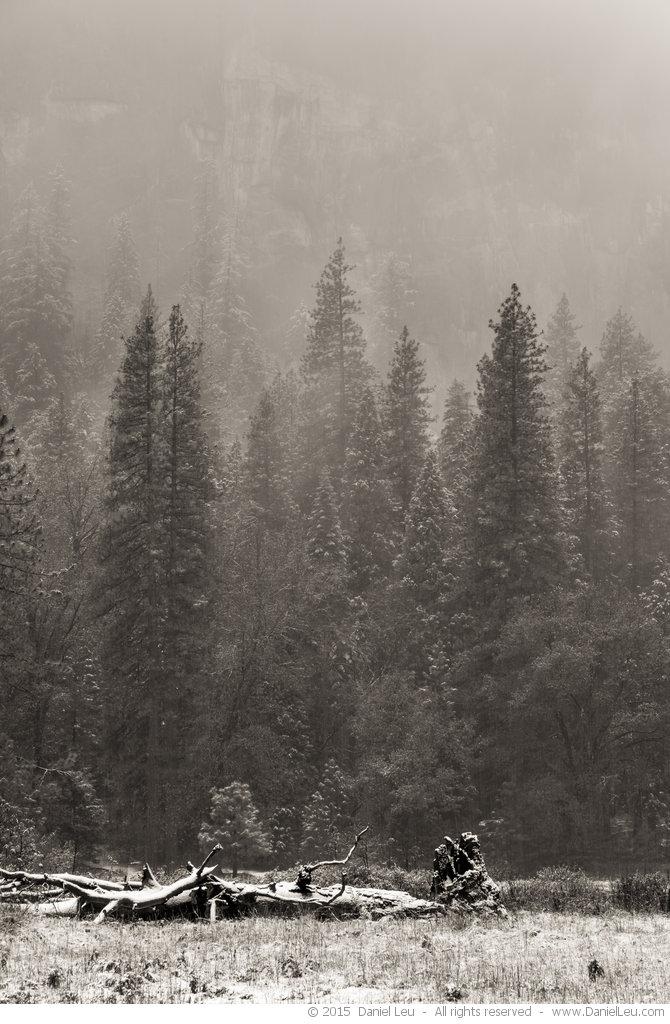 Early Snow at El Capitan Meadows #2, Yosemite National Park