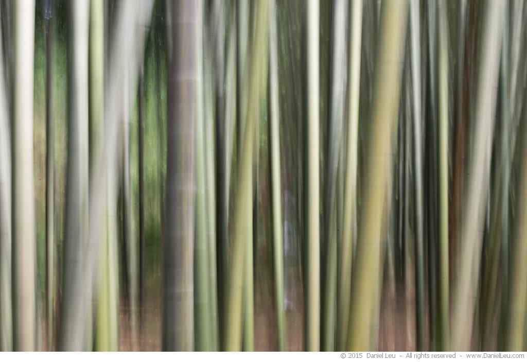 Bamboo, abstract