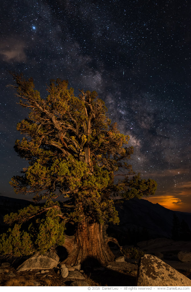 Juniper Tree and Milkyway