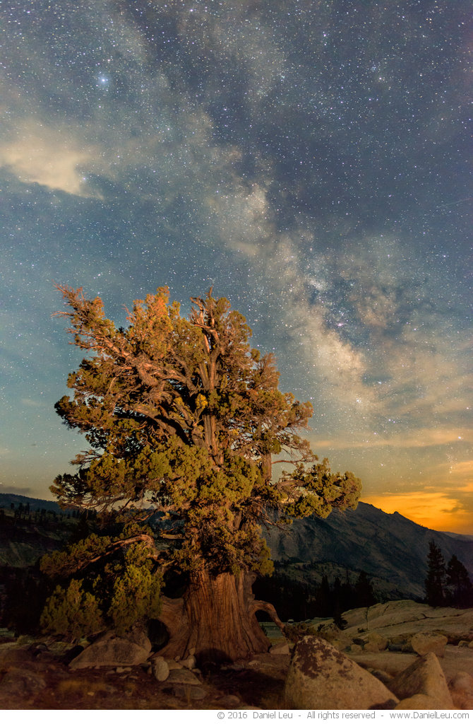 Juniper Tree and Milkyway after Moonrise