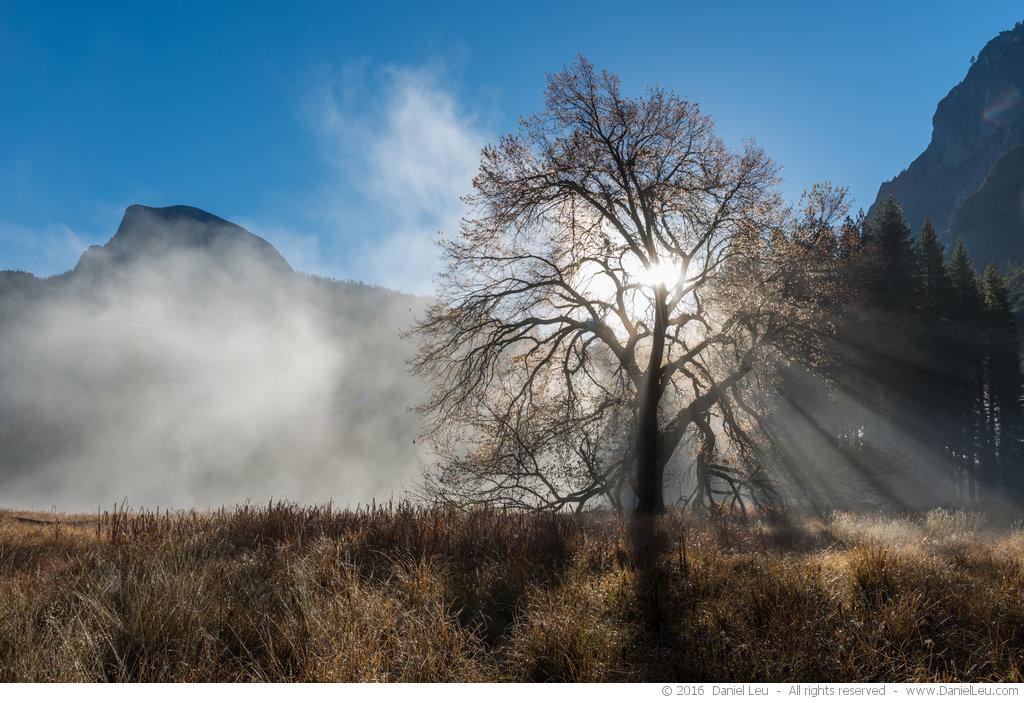 Elm Tree with Sun Rays – Yosemite National Park