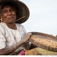 Rice Farmer, Burma