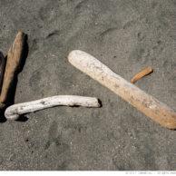 Driftwood #3
