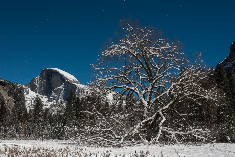 Elm Tree with Half Dome and Stars