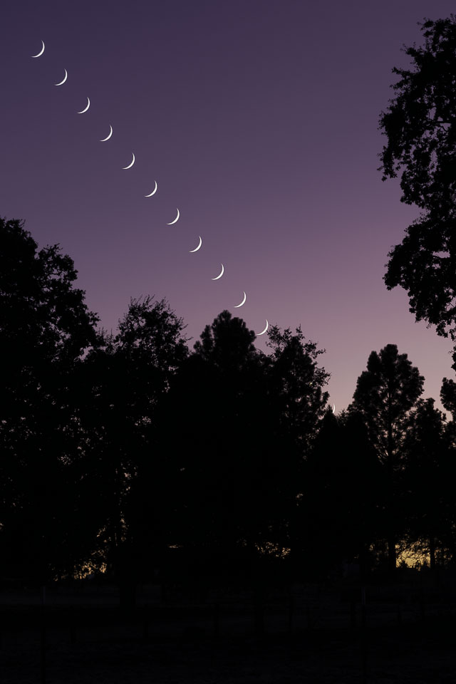 Setting Moons over Trees