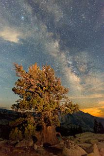 DL_20160820_DSC1577-ME-Yosemite-Juniper-Tree-Stars.jpg
