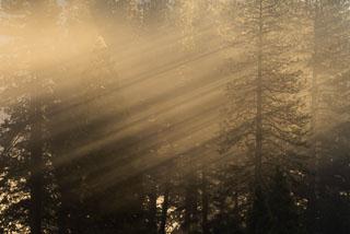 DL_20141123_DSC1626-Yosemite_v1.jpg