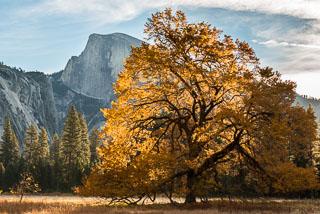 Yosemite_DL_20121103_DSC0933.jpg