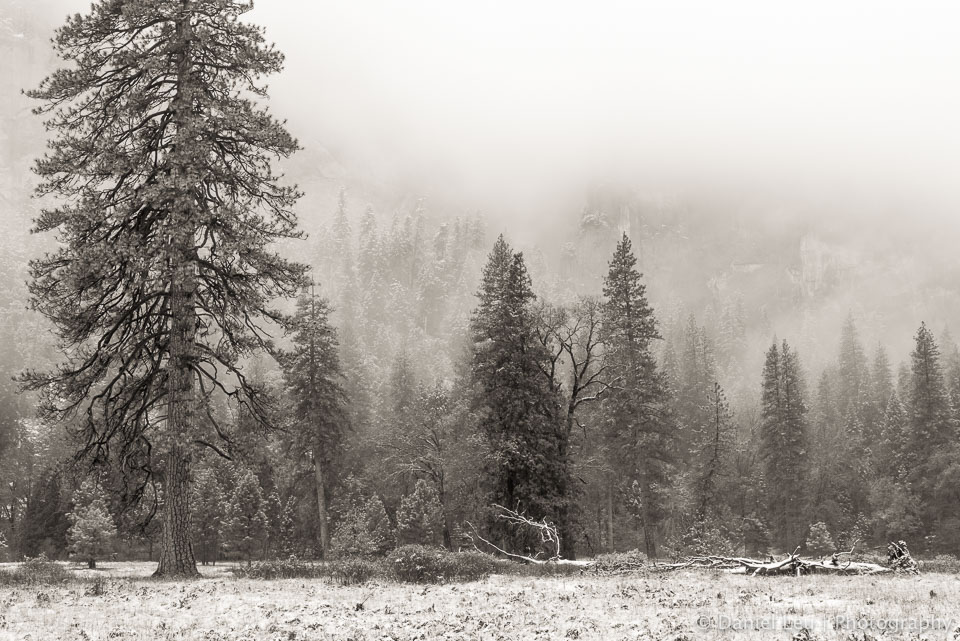 Early Snow at El Capitan Meadows #1, Yosemite National Park