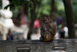 DL_20140420_DSC4975_Guiyang_China_Qianling_Park.jpg