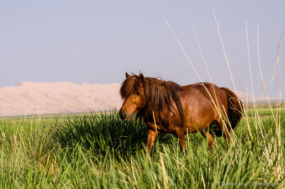 Mongolia_DL_20120710_DSC5393.jpg