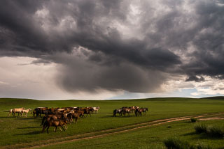 Mongolia_DL_20120707_DSC4675-Edit.jpg