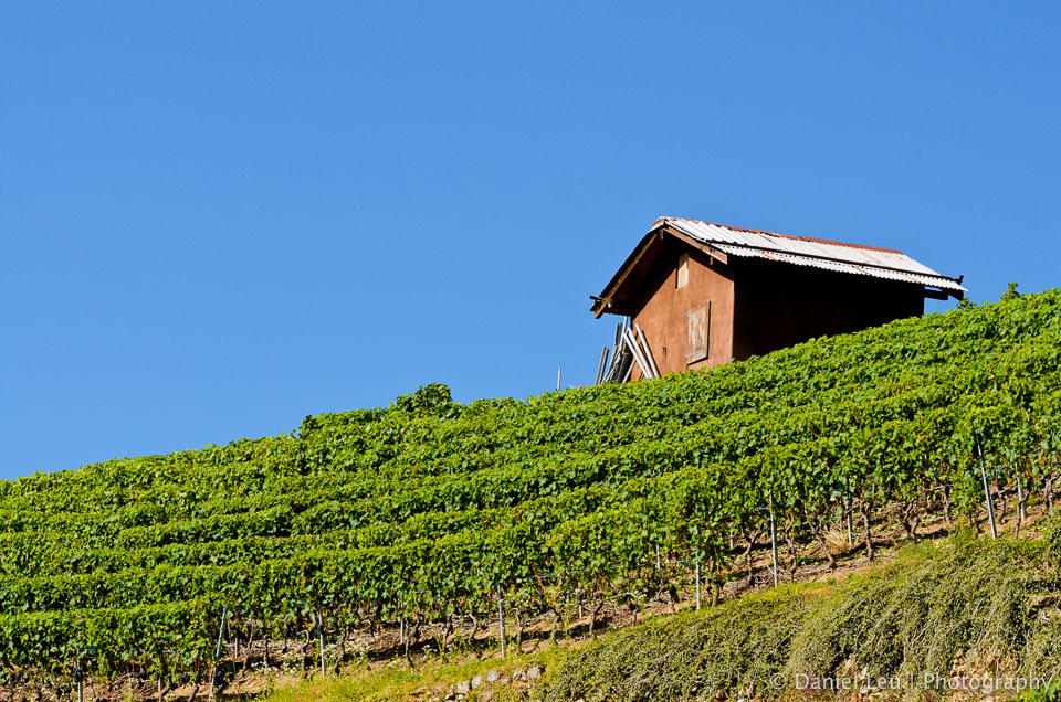 Shack in vineyard