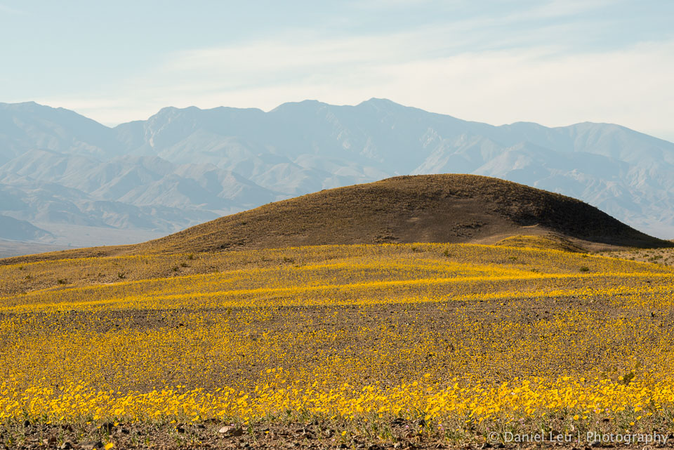 DL_20160227_DSC4455_Death_Valley_Wildflowers.jpg