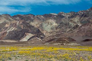 DL_20160227_DSC4422_Death_Valley_Wildflowers.jpg