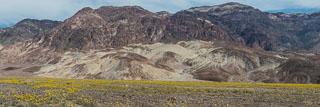 DL_20160227_DSC4434_Death_Valley_Wildflowers-Pano.jpg
