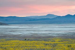 DL_20160228_DSC4708_Death_Valley_Wildflowers.jpg