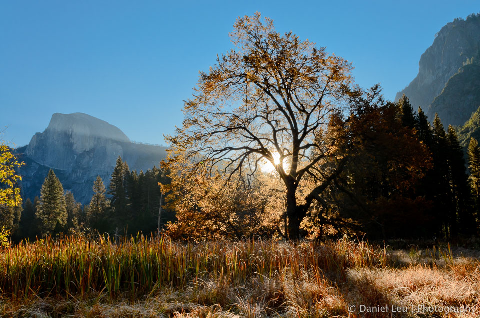Elm and Half Dome at Sunrise