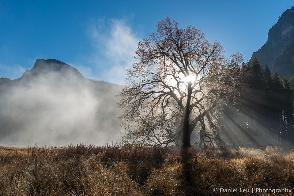 Elm Tree with Sun Rays