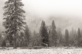 DL_20151115_DSC1758-Yosemite-Snow.jpg