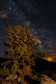 DL_20160820_DSC1503-ME-Yosemite-Juniper-Tree-Milkyway.jpg