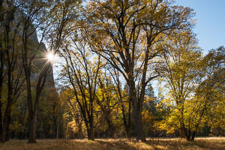 Yosemite_DL_20121103_DSC1056.jpg